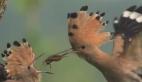 Ağır çekimde kuşun yavrusunu beslemesi
