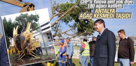 Antalya'da ağaçlar kesilmek yerine söküldü