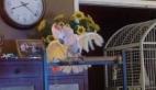 Atarlı papağan