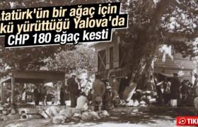 Atatürk Yalova'daki ağacın kesilmesini emretmişti