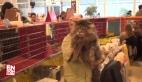 Bu kediye 1 milyon lira fiyat biçildi
