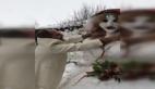 Bursa'lı adam kardan gelinle evlendi