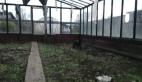 Camı çerçeveyi indirip intihar eden kedi