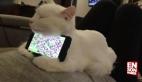 Her eve lazım cinsten kedi