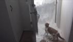 Karla kaplı kapıdan dışarıya çıkmaya çalışan kedi