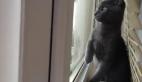 Kedinin kar tanelerini yakalamaya çalışması