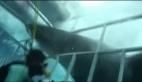 Köpek balığının dalgıca saldırdı anlar kamerada