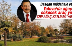 CHP'li Vefa Salman Yalova'da ağaç kesecek
