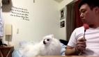 Sahibinin karpuzunda gözü kalan köpek